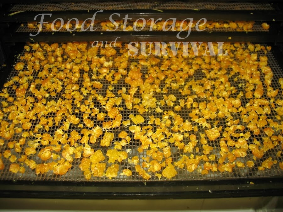 Freezing and Dehydrating Corn: Choose Your Own Adventure