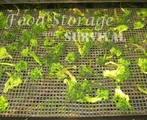 Frozen veggies are perfect for dehydrating! How to dry frozen broccoli!