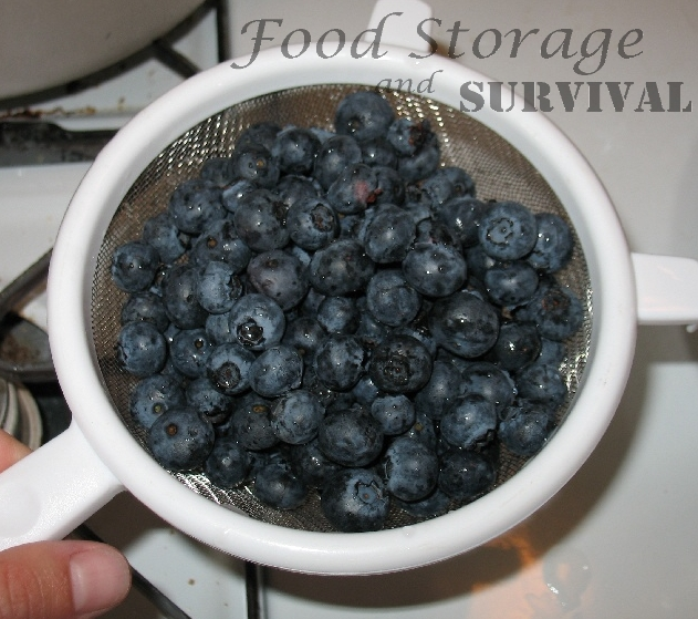 Dehydrating Blueberries