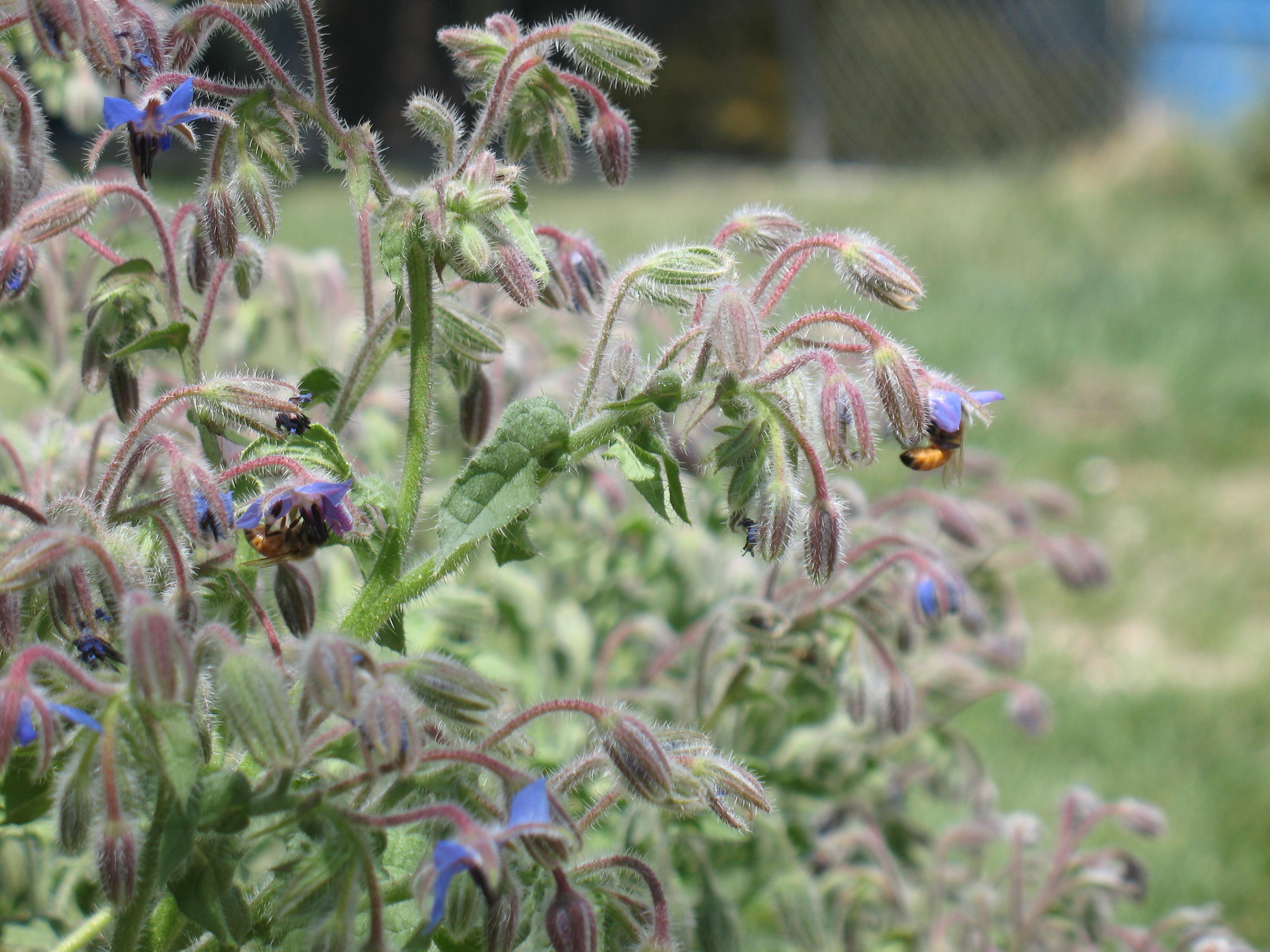 Honeybee Update