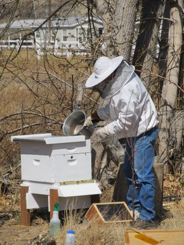 Putting New Bees in the Hive