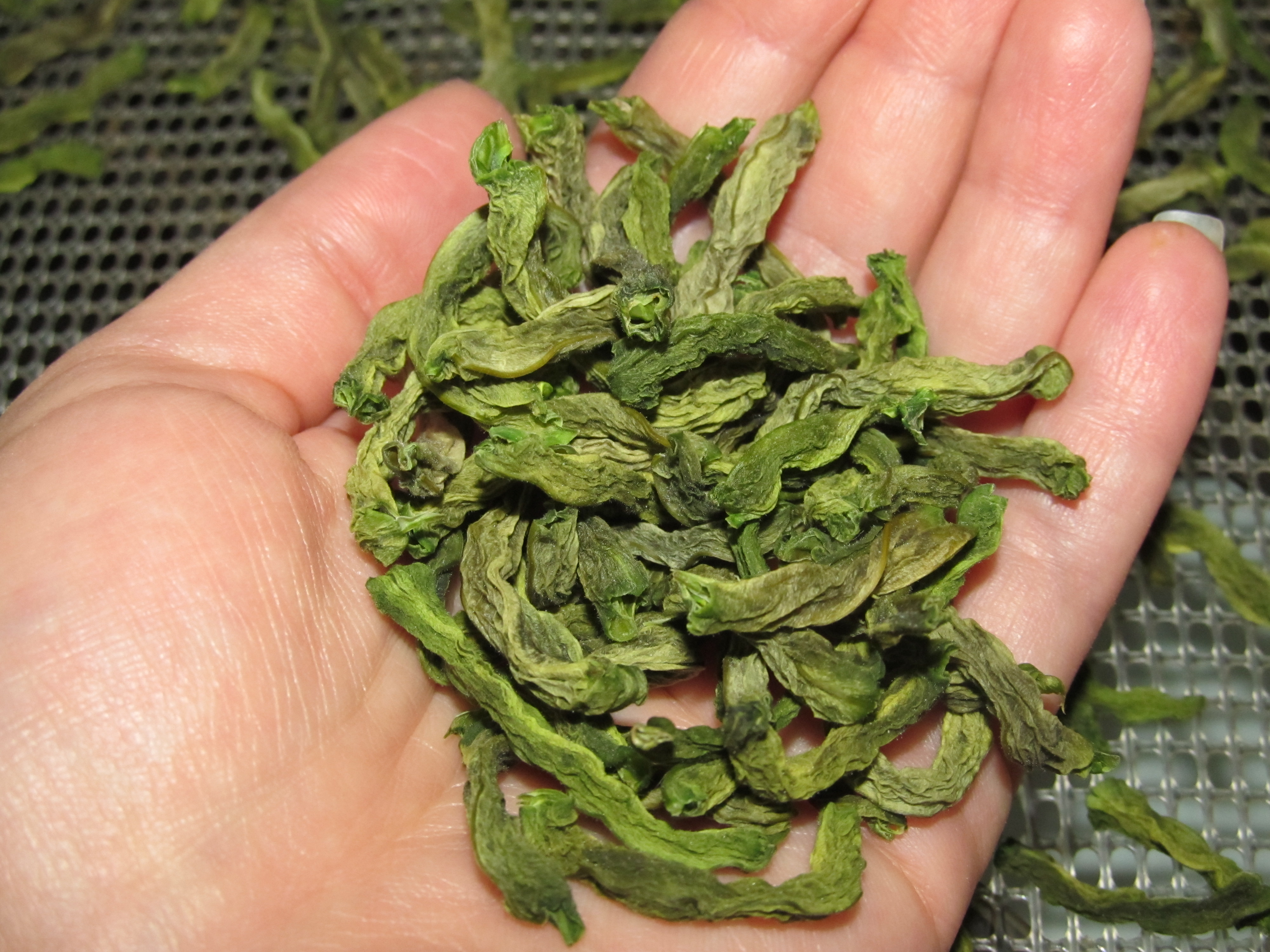 Using And Cooking With Dehydrated Green Beans