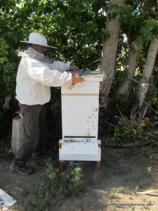 Installing the outer lid on the hive
