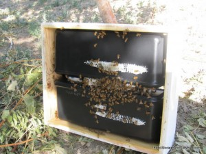 Comb being built on the bottom side of the top hive feeder.  Crazy ambitious bees!