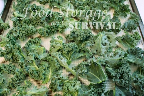 how to cut back kale