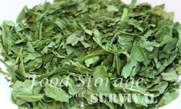 How to Dehydrate Spinach--Great for spinach flakes or powder!