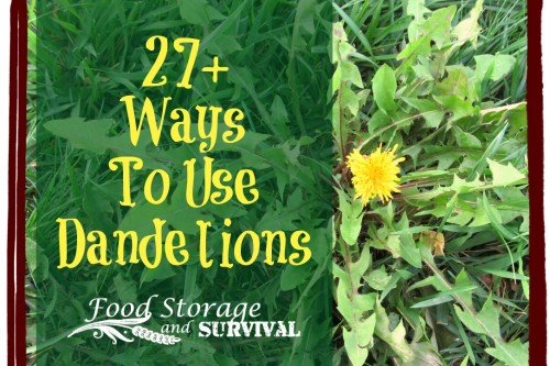 27+ Ways to Use Dandelion