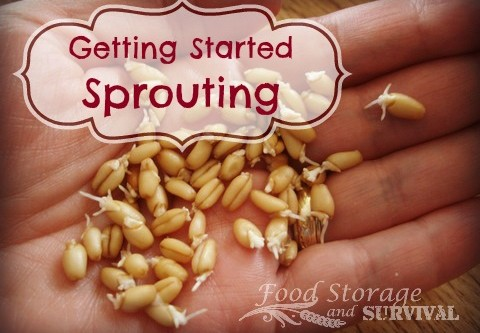 Getting Started Sprouting!