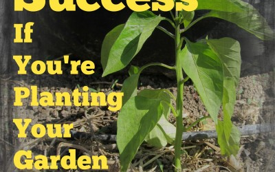 Food Storage and Survival Radio Episode 58: Six Tips for Success if You're Planting Your Garden Late