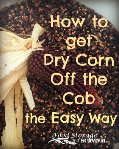 How to Get Dry Corn Off the Cob the Easy Way!  Food Storage and Survival