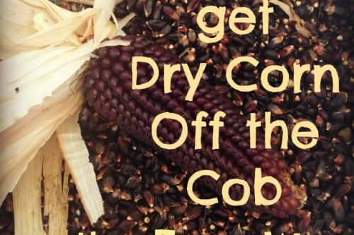 How To Get Dry Corn Off The Cob The Easy Way