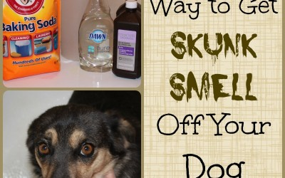 The Best Way to Get Skunk Smell Off a Dog